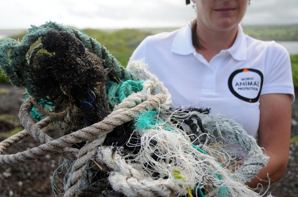 Global Ghost Gear Initiative (GGGI), World Animal Protection